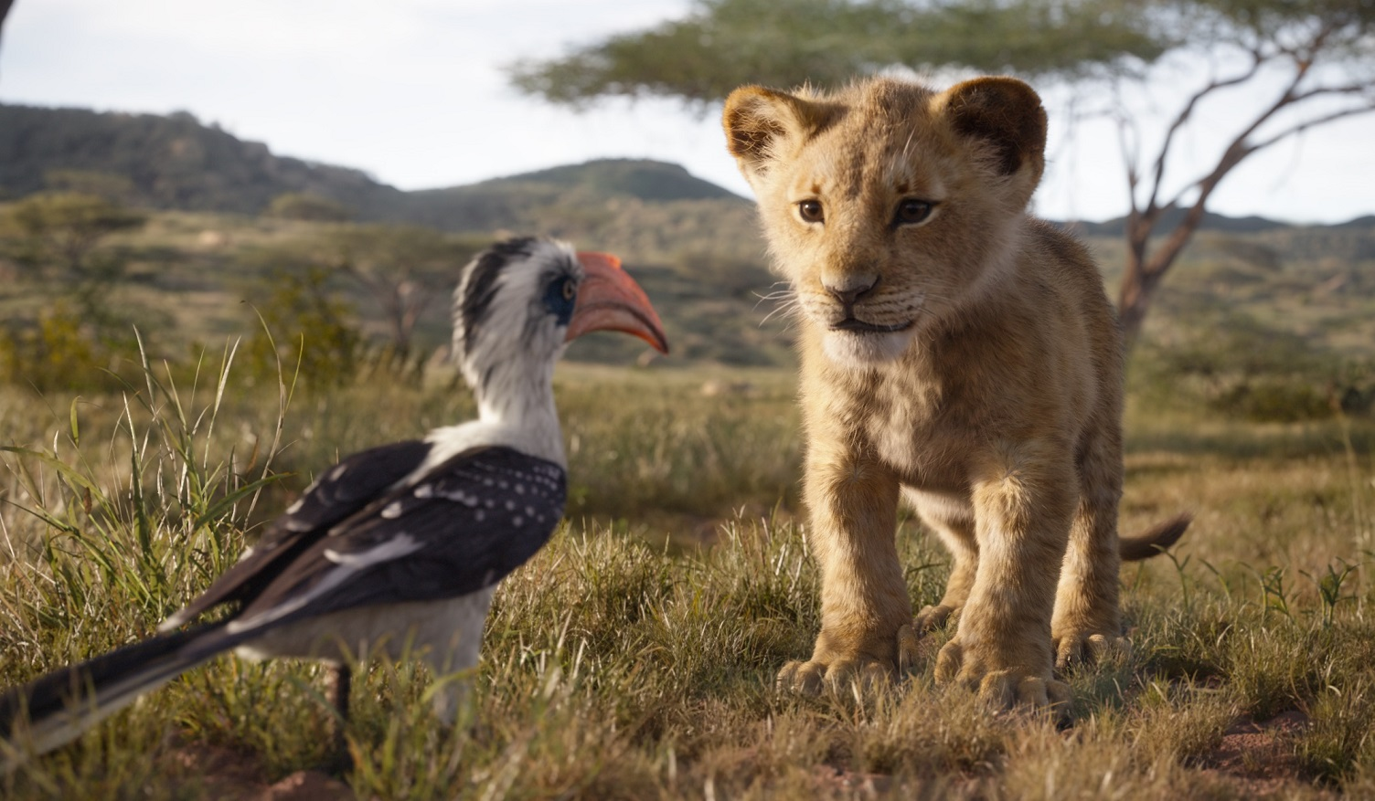 kadr z filmu THE LION KING